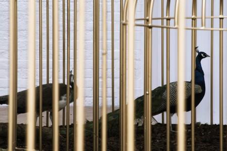 Mircea Cantor, The Need for Uncertainty (2008) © Mircea Cantor. Courtesy of the artist. Courtesy Yvon Lambert, Paris, New York.